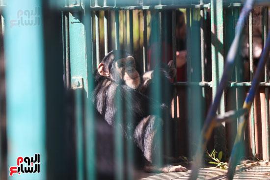 حديقة الحيوان (3)