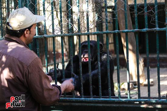 حديقة الحيوان (7)