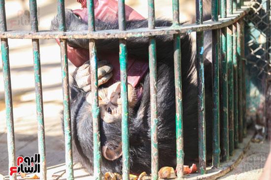 حديقة الحيوان (9)