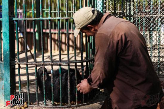 حديقة الحيوان (4)