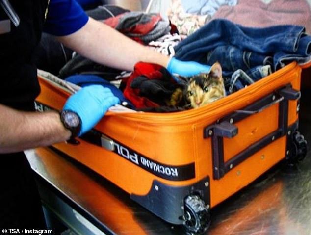 قطة داخل حقيبة