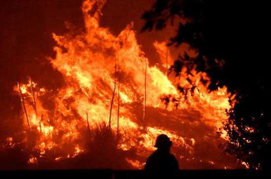 النيران تلتهم أشجار