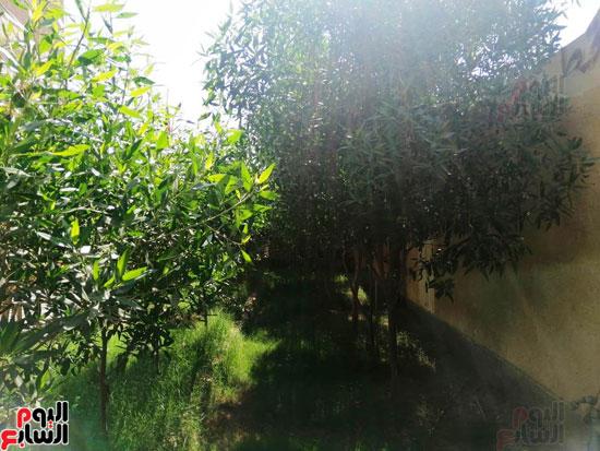 حدائق-خضراء-وفصول-مزينة-بالألوان-بفضل-مجلس-الامناء-بالفيوم-(11)