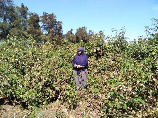 حكاية شفاء مزارعة بكفر الشيخ من فيروس سى (6)