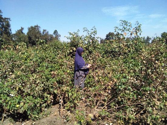 حكاية شفاء مزارعة بكفر الشيخ من فيروس سى (2)