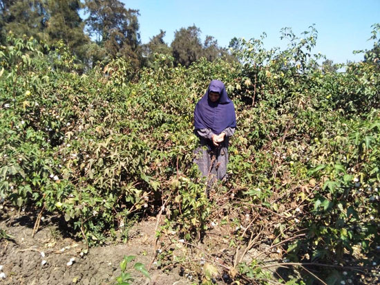حكاية شفاء مزارعة بكفر الشيخ من فيروس سى (3)