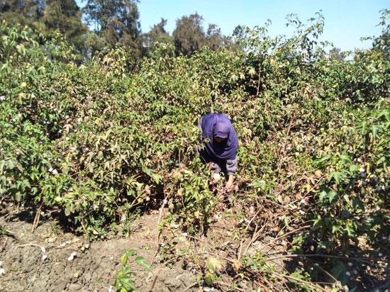 حكاية شفاء مزارعة بكفر الشيخ من فيروس سى (8)