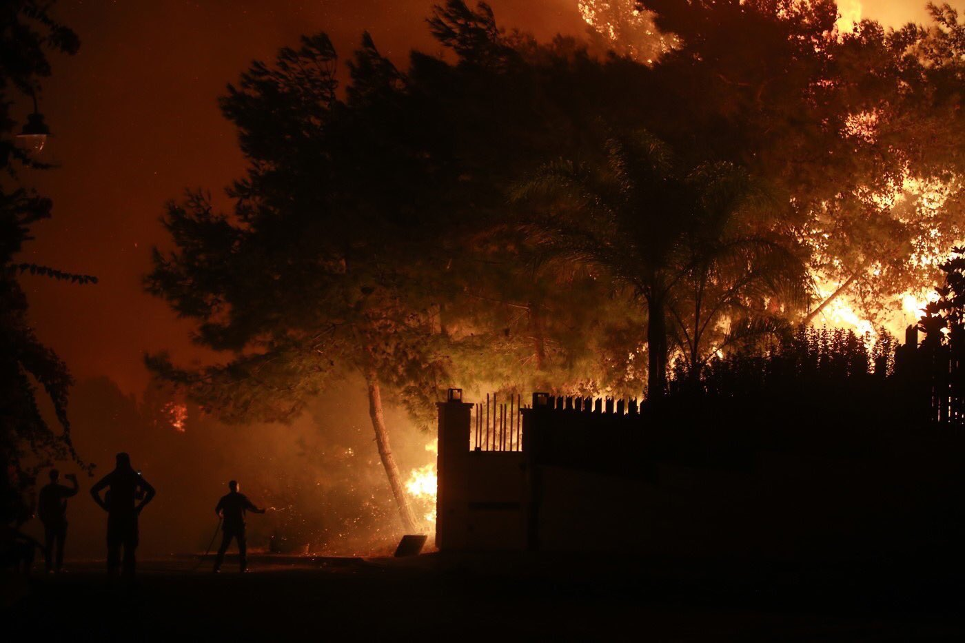 2- النيران تلتهم الشجر