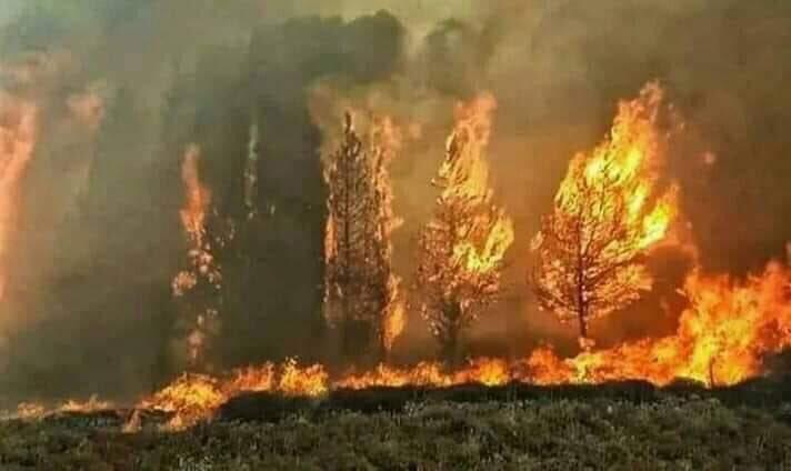 7- الشجر يحترق