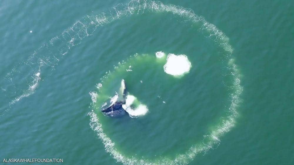 صورة الحوت