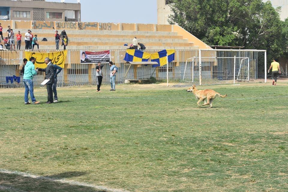 الكلب يقتحم مباراة فى القسم الثانى