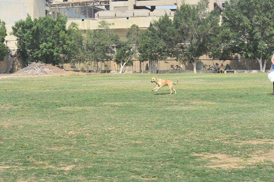 كلب فى الملعب