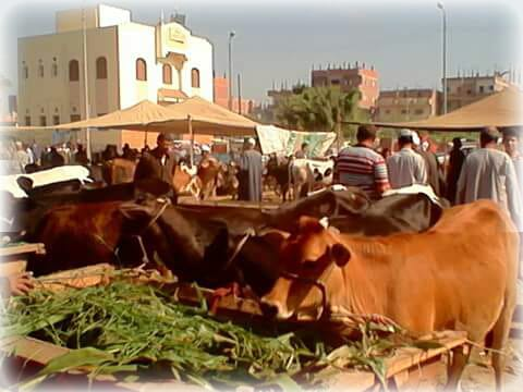 سوق الخميس في مركز الشباب  (1)
