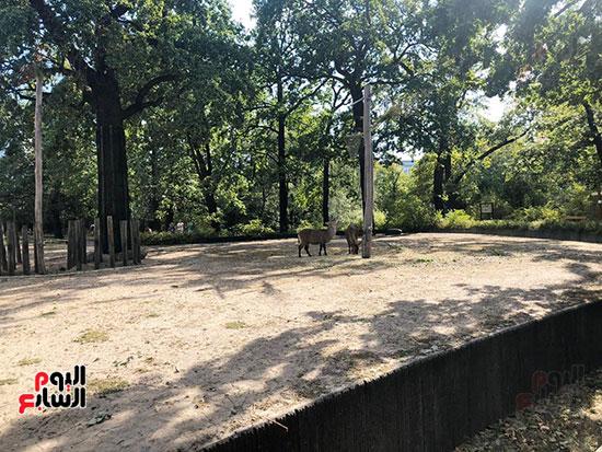 حديقة حيوان برلين (10)