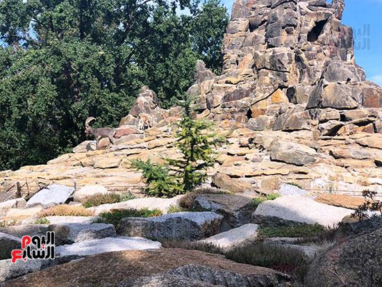 حديقة حيوان برلين (1)