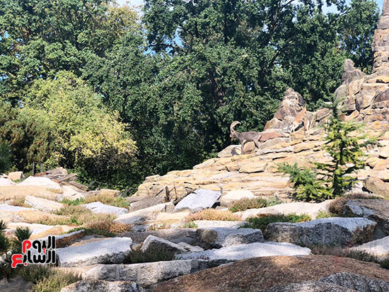 حديقة حيوان برلين (4)