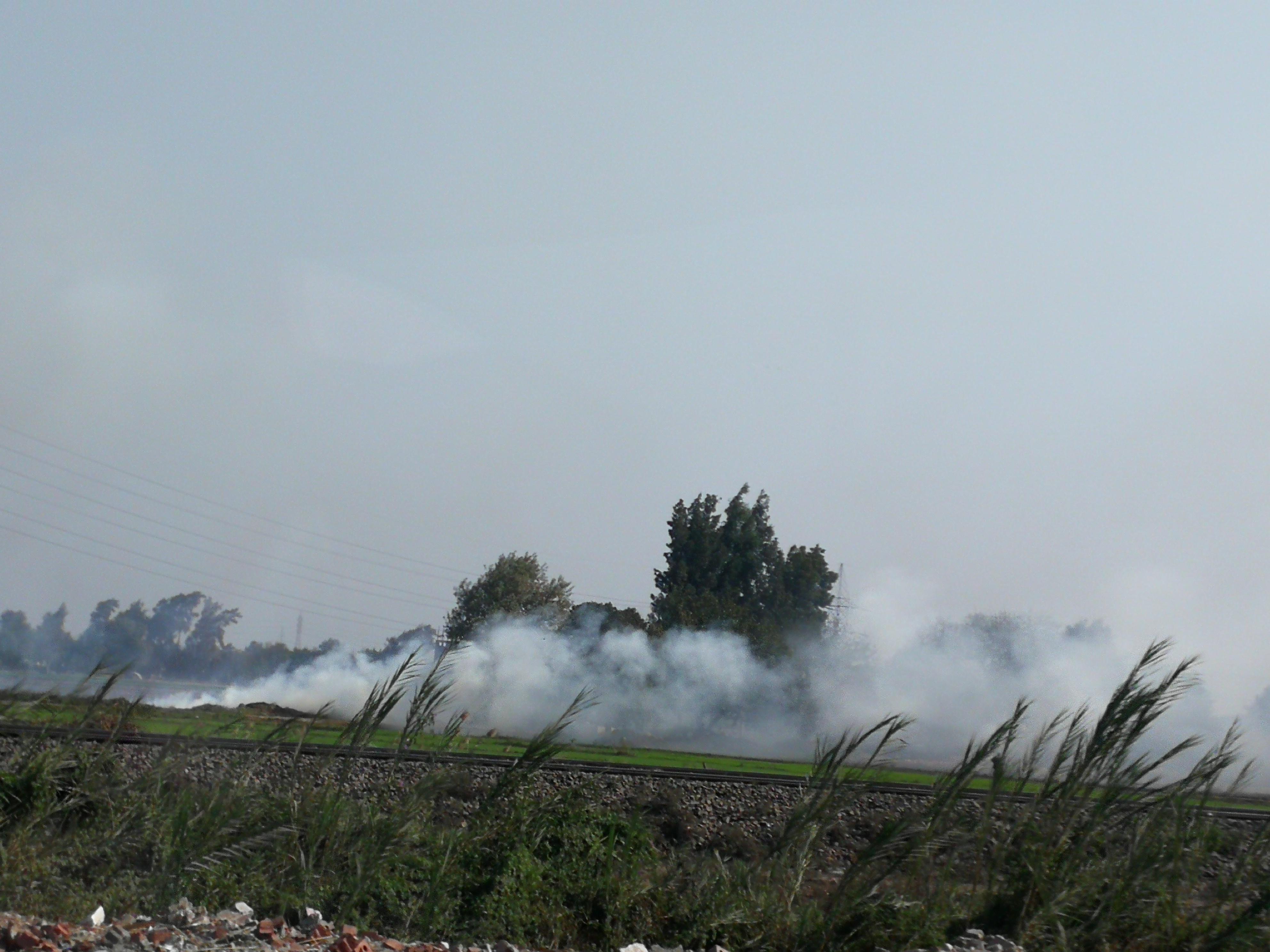 حريق قش الرز بالغربية (7)