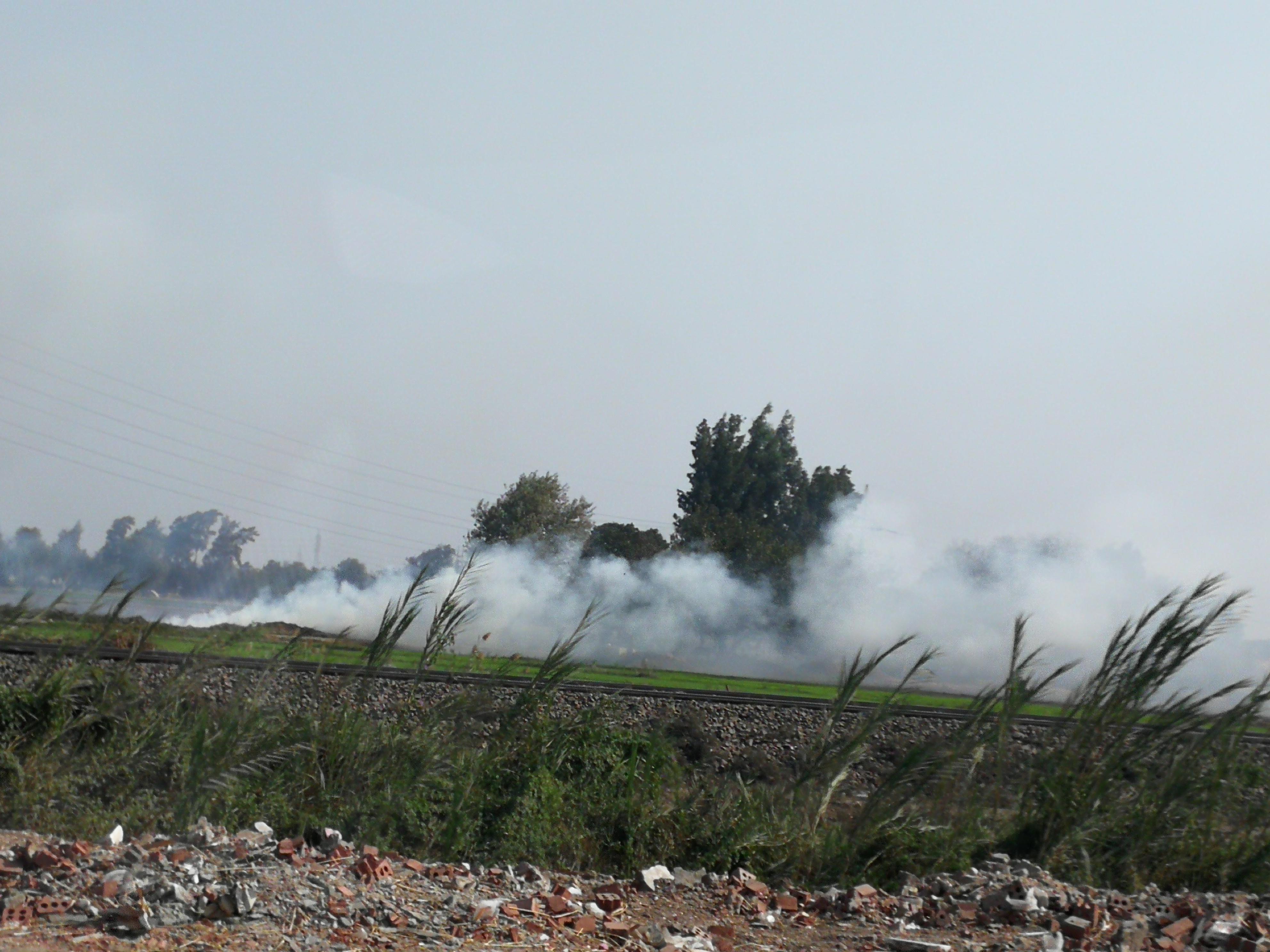 حريق قش الرز بالغربية (6)