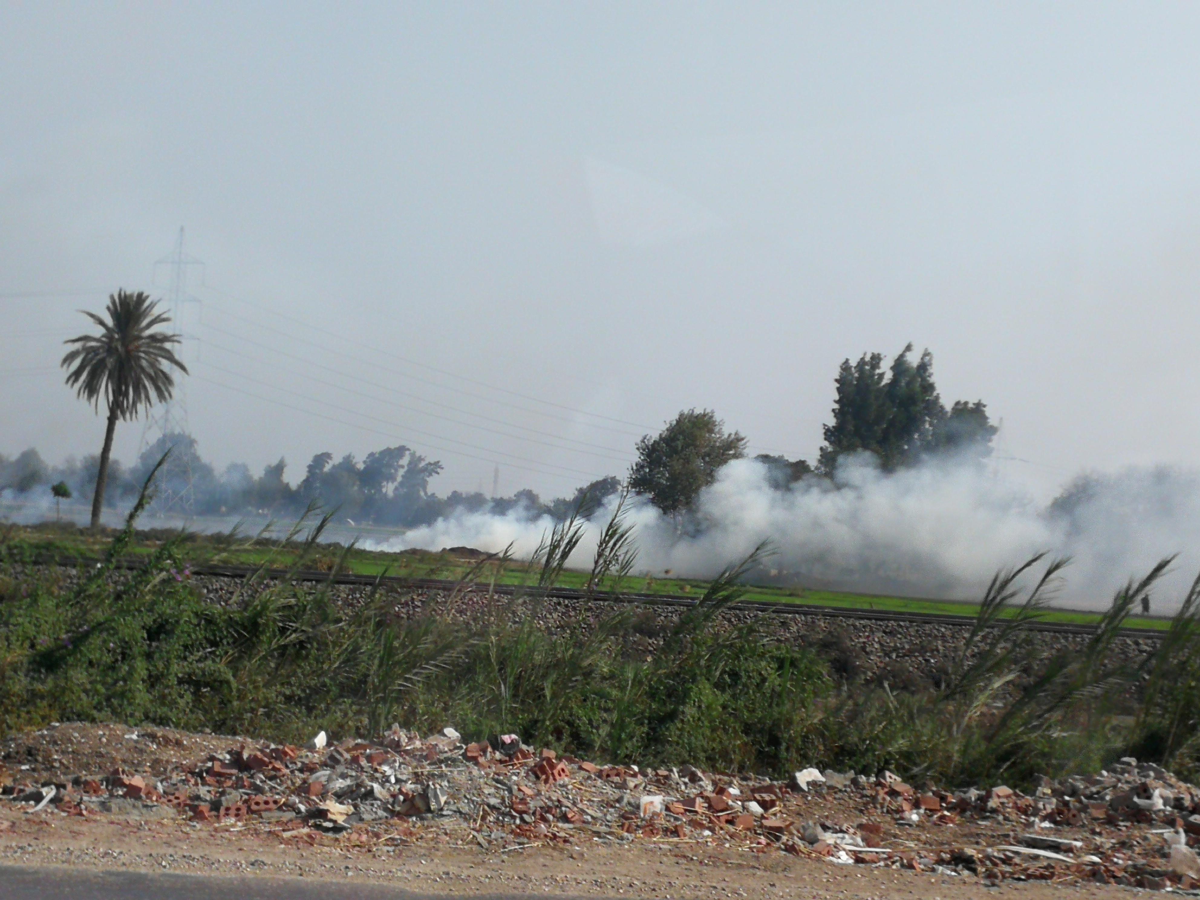 حريق قش الرز بالغربية (5)