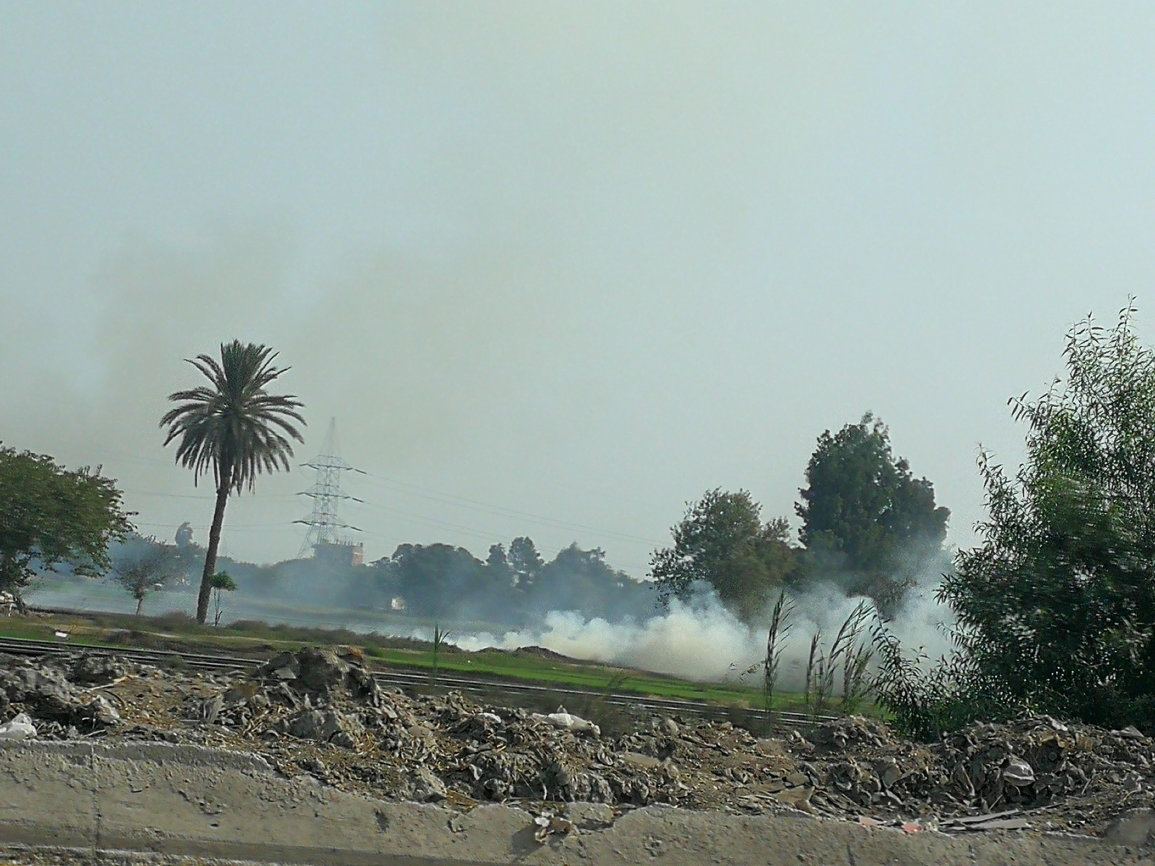 حريق قش الرز بالغربية (3)