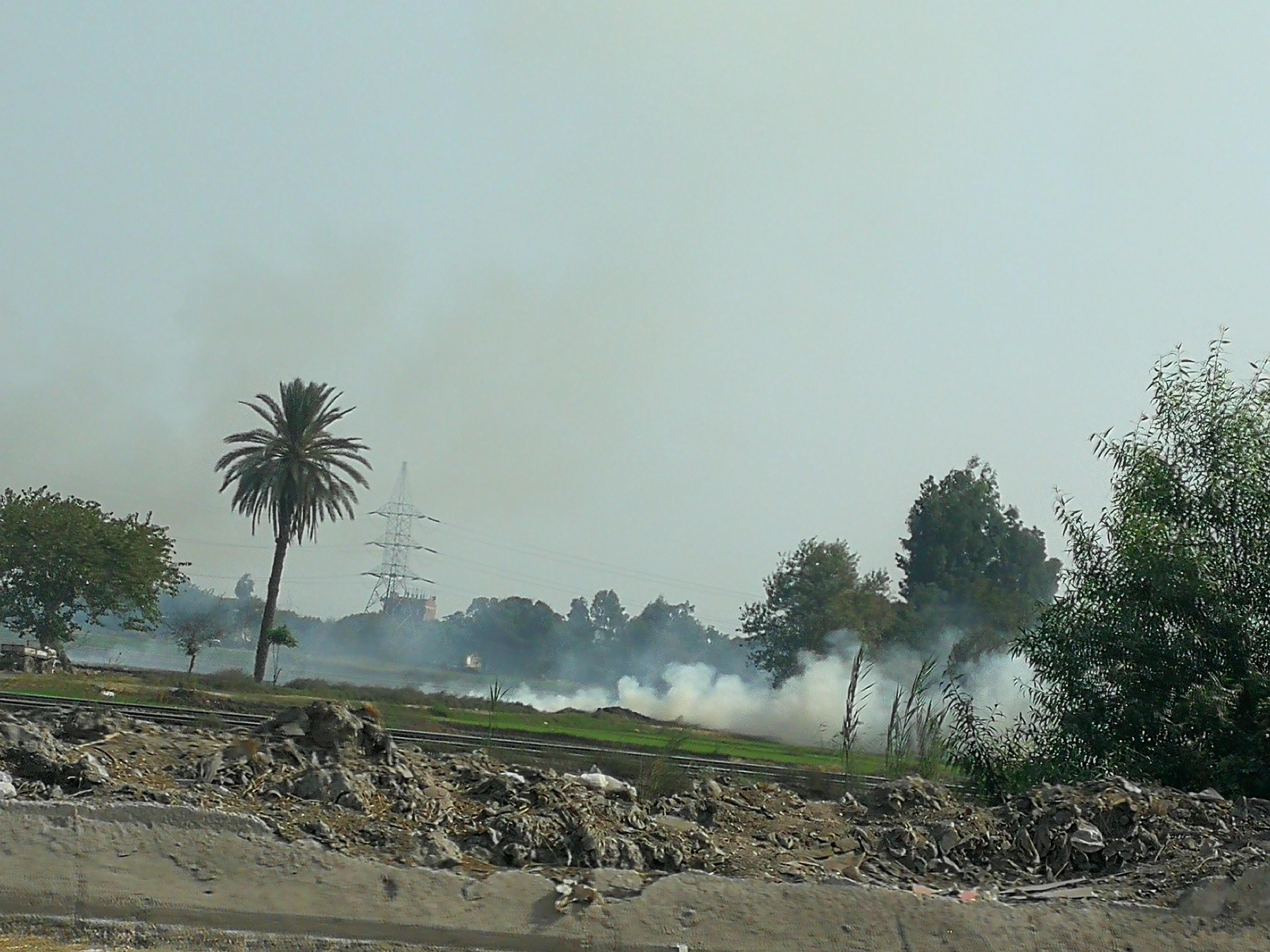 حريق قش الرز بالغربية (4)