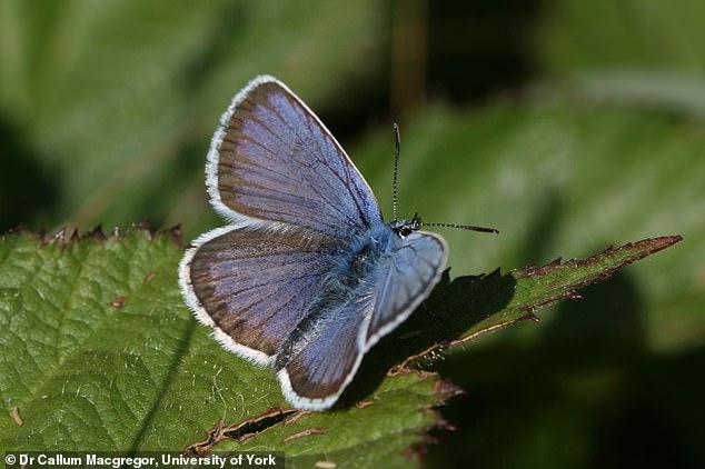 الفراشة 2