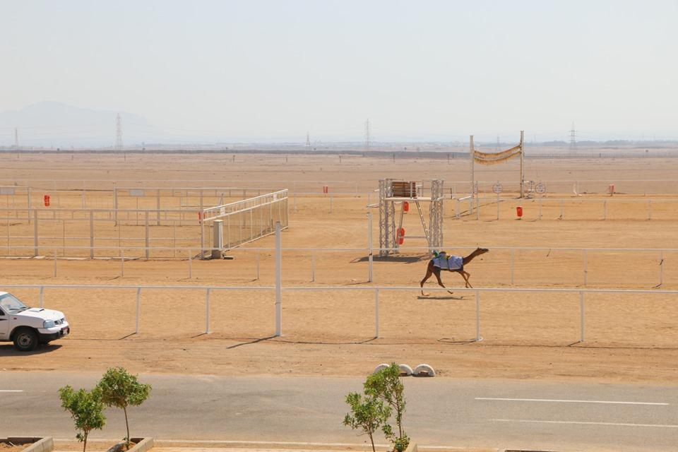 مضمار المهرجان الأول لسباقات رياضات الهجن بمدينة شرم الشيخ (5)