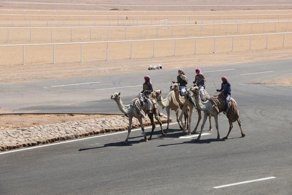 مضمار المهرجان الأول لسباقات رياضات الهجن بمدينة شرم الشيخ (3)