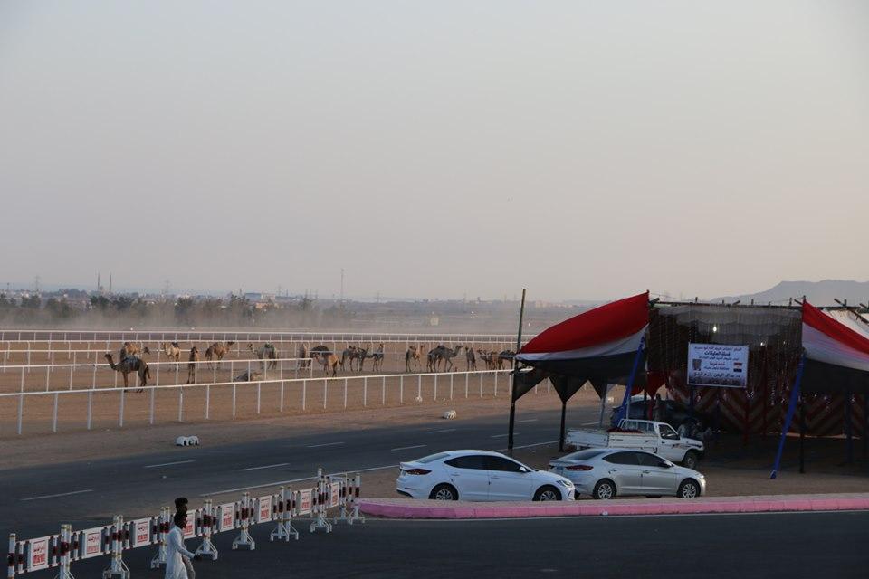 انطلاق فعاليات مهرجان شرم الشيخ الأول للهجن  (2)