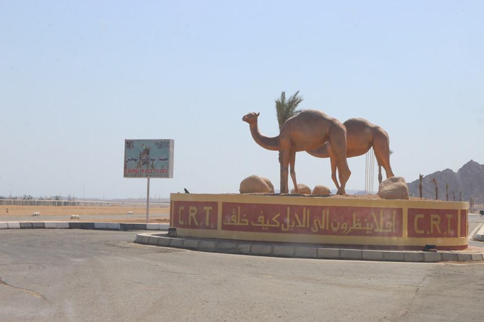 مضمار المهرجان الأول لسباقات رياضات الهجن بمدينة شرم الشيخ (2)