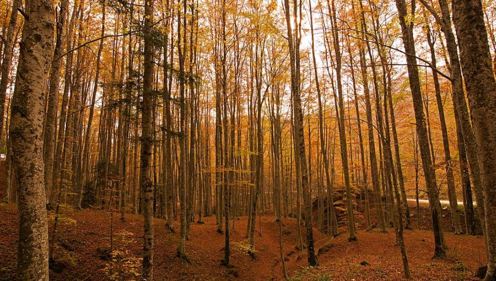 غابة كاسينتينو