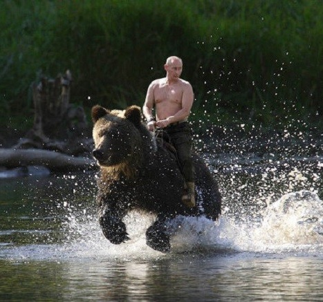 بوتين والدب