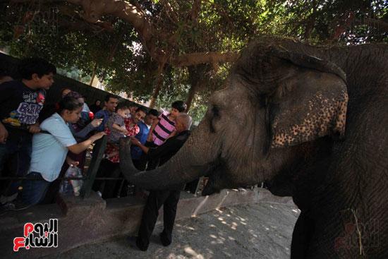 الفيلة نعيمة (15)