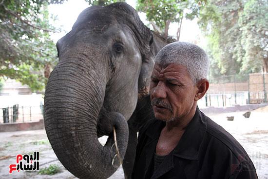 الفيلة نعيمة (17)