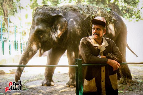 الفيلة نعيمة (20)