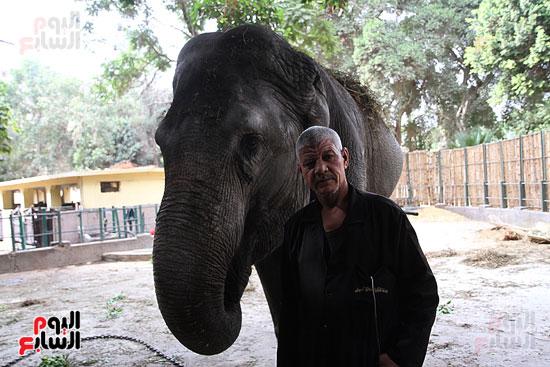 الفيلة نعيمة (18)
