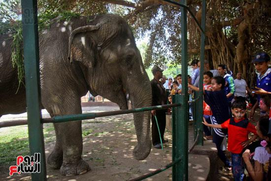 الفيلة نعيمة (4)