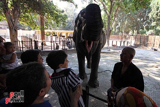 الفيلة نعيمة (16)