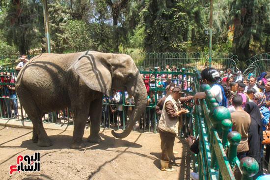 الفيلة نعيمة (14)