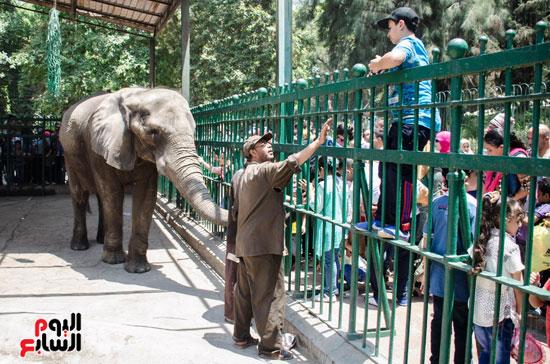 الفيلة نعيمة (13)