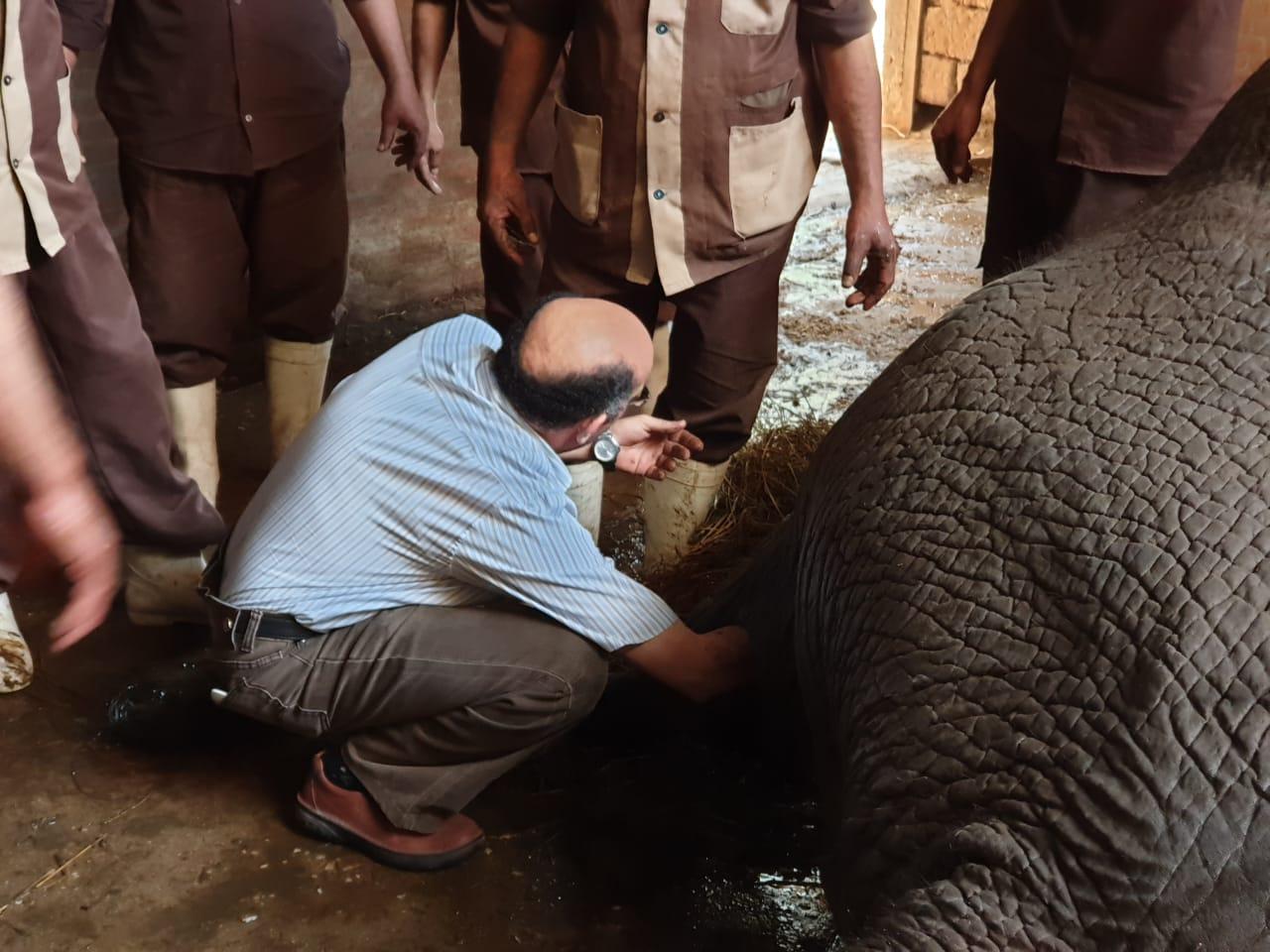 نفوق الفيلة نعيمية   (5)