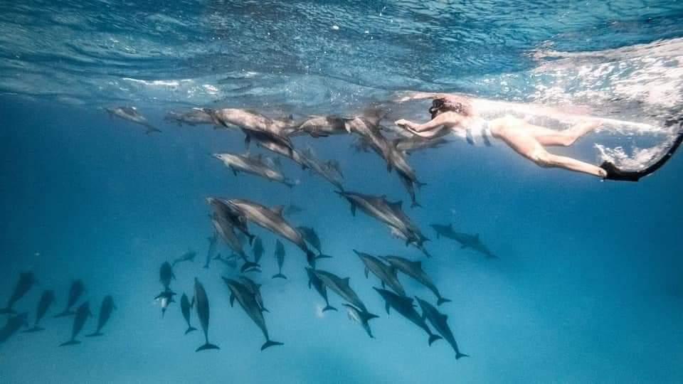 47-السباحة مع الدلافين بمرسي علم