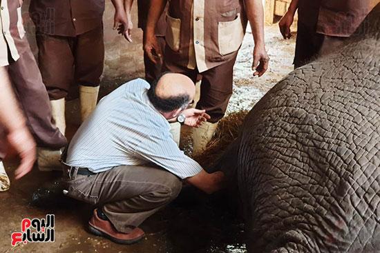 عمليات-انقاذ-الفيلة