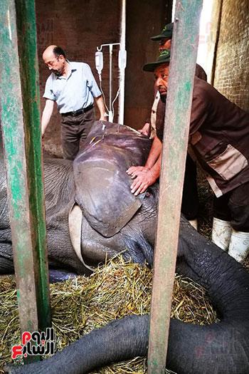 الفيلة-نعيمة