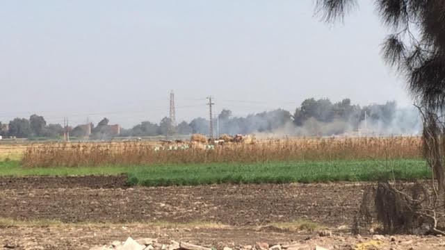 2- حرق مكشوف لقش الأرز فى وضح النهار