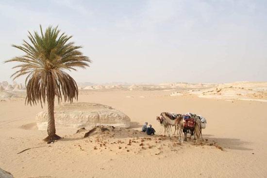 صورة.. دليلك السياحى لقضاء موسم