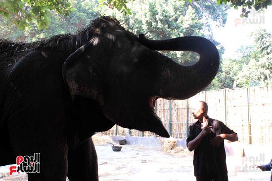 الفيلة نعيمة (3)