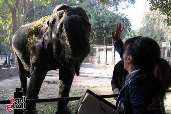 الفيلة نعيمة (6)