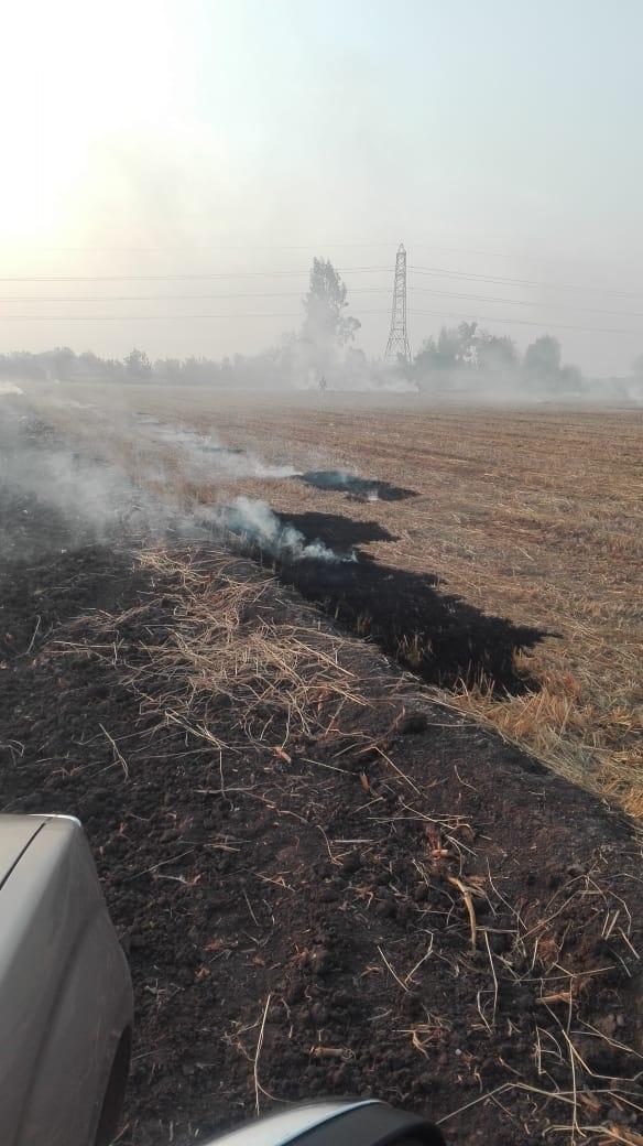 4- حرق قش الأرز للتخلص منه