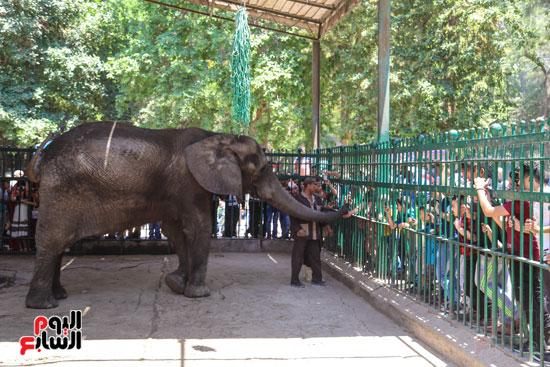 الفيلة نعيمة (9)